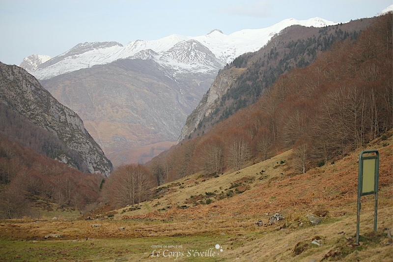 Randonner dans le bois de Belonce au-dessus de Borce, en Vallée d'Aspe.