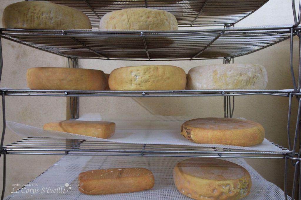 La collection des fromages de chèvre à la ferme Lanset.