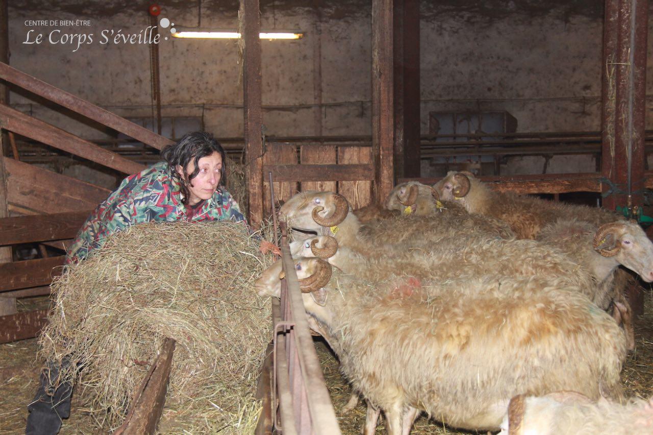 Danièle Gay à la bergerie pour les soins du soir.