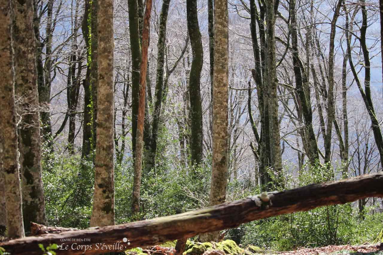 Une nouvelle génération d'arbres se fraie une place à l'ombre de leurs aînés, au-dessus de Cette.