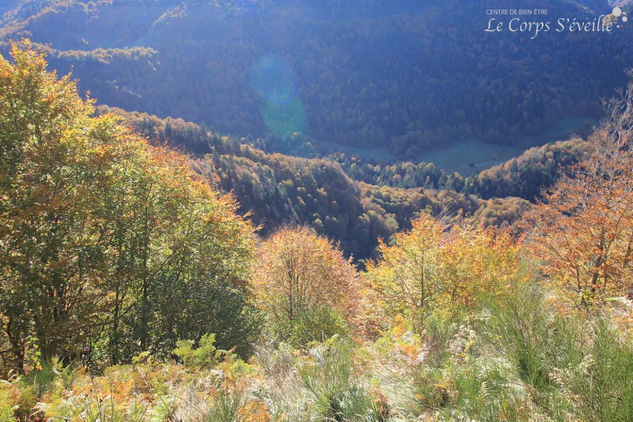 La forêt en Vallée d'Aspe, près du plateau de Gentiane, en automne.