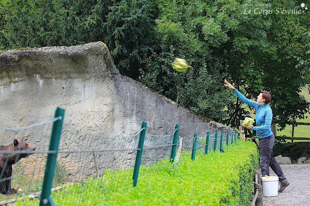 Lancer de salades de part et d'autre du grillage. Marie Sparacio à Parc Ours, Pyrénées Atlantiques.