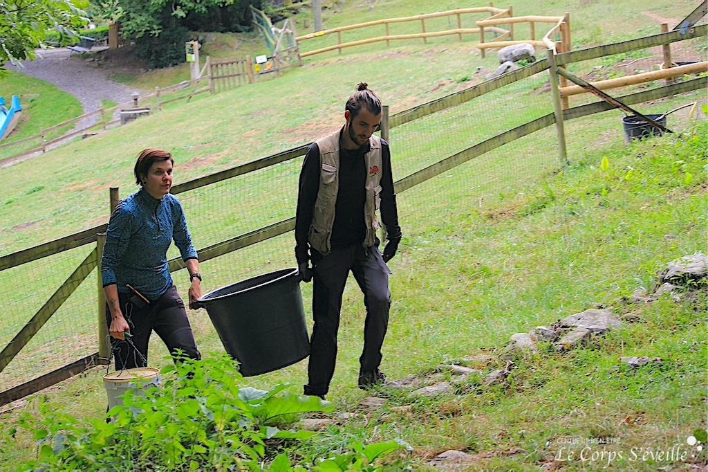 Marie et Tom apportent leurs croquettes aux sangliers. Parc Ours en Béarn.