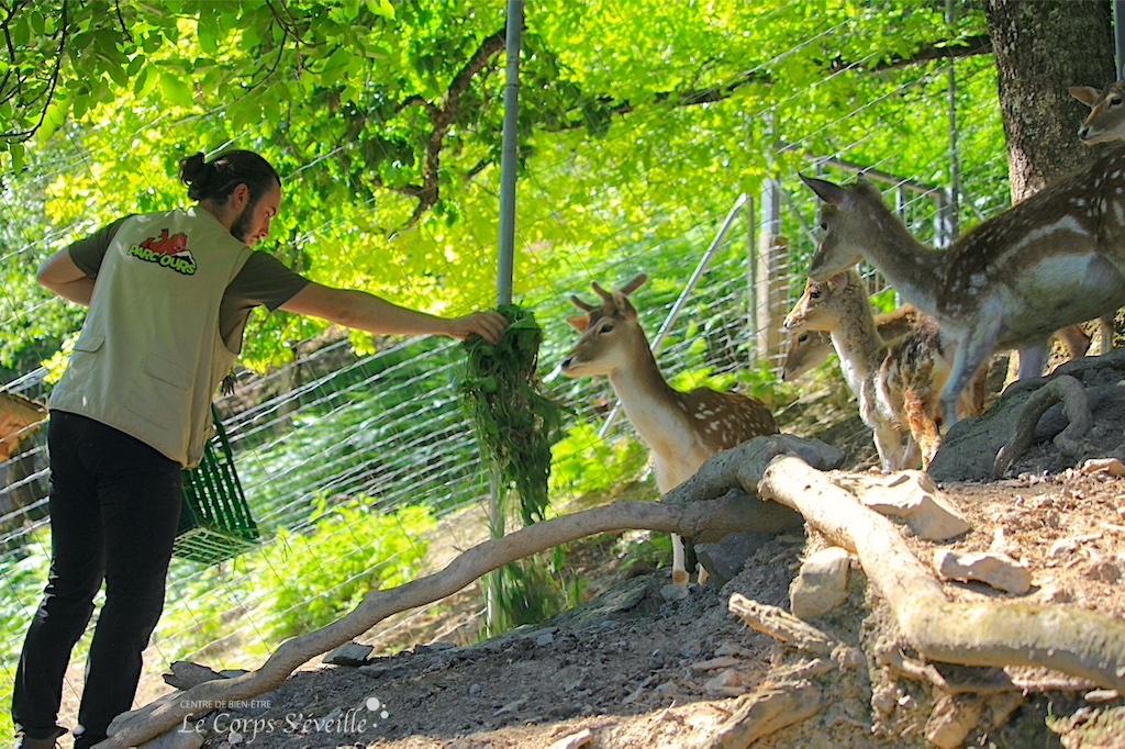 Rémi, soigneur animalier à Parc Ours, apporte de l'herbe aux daims.