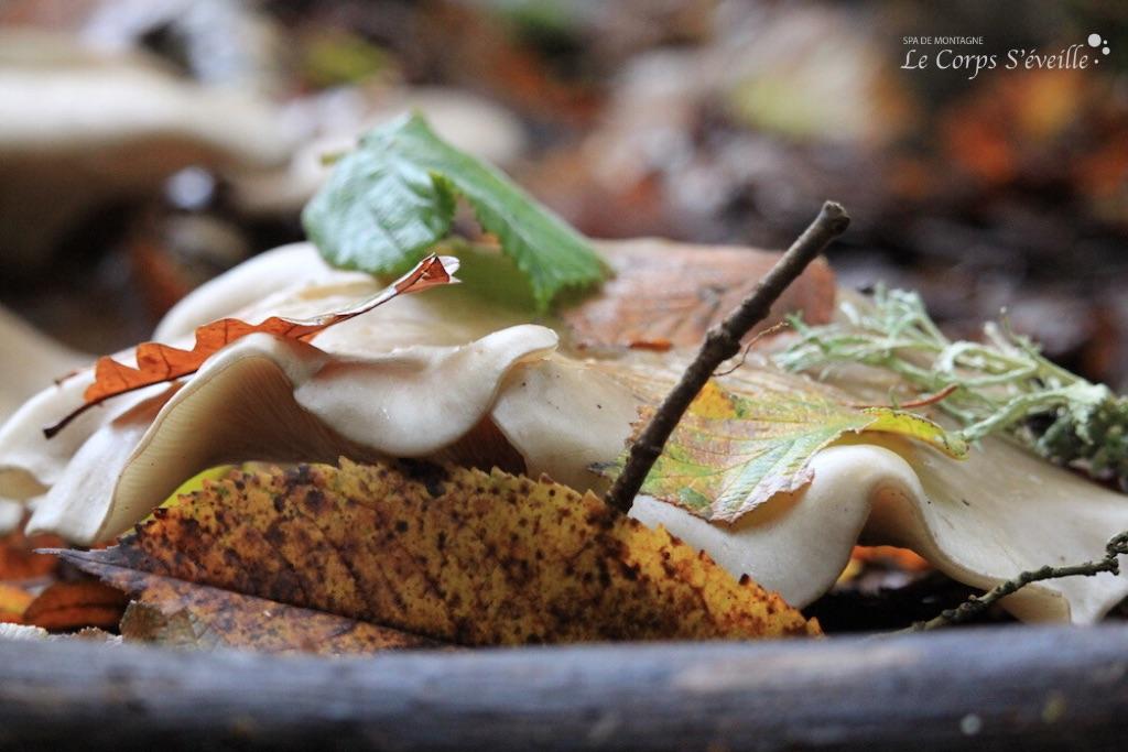 Dans les Pyrénées béarnaises, un champignon enfile son costume d'automne.