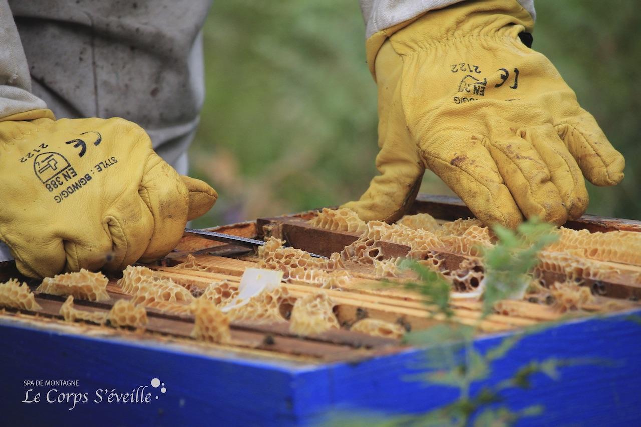 Une ruche en mauvaise santé se repère par l'absence de miel sur deux cadres. Pas de surplus = signe de danger.