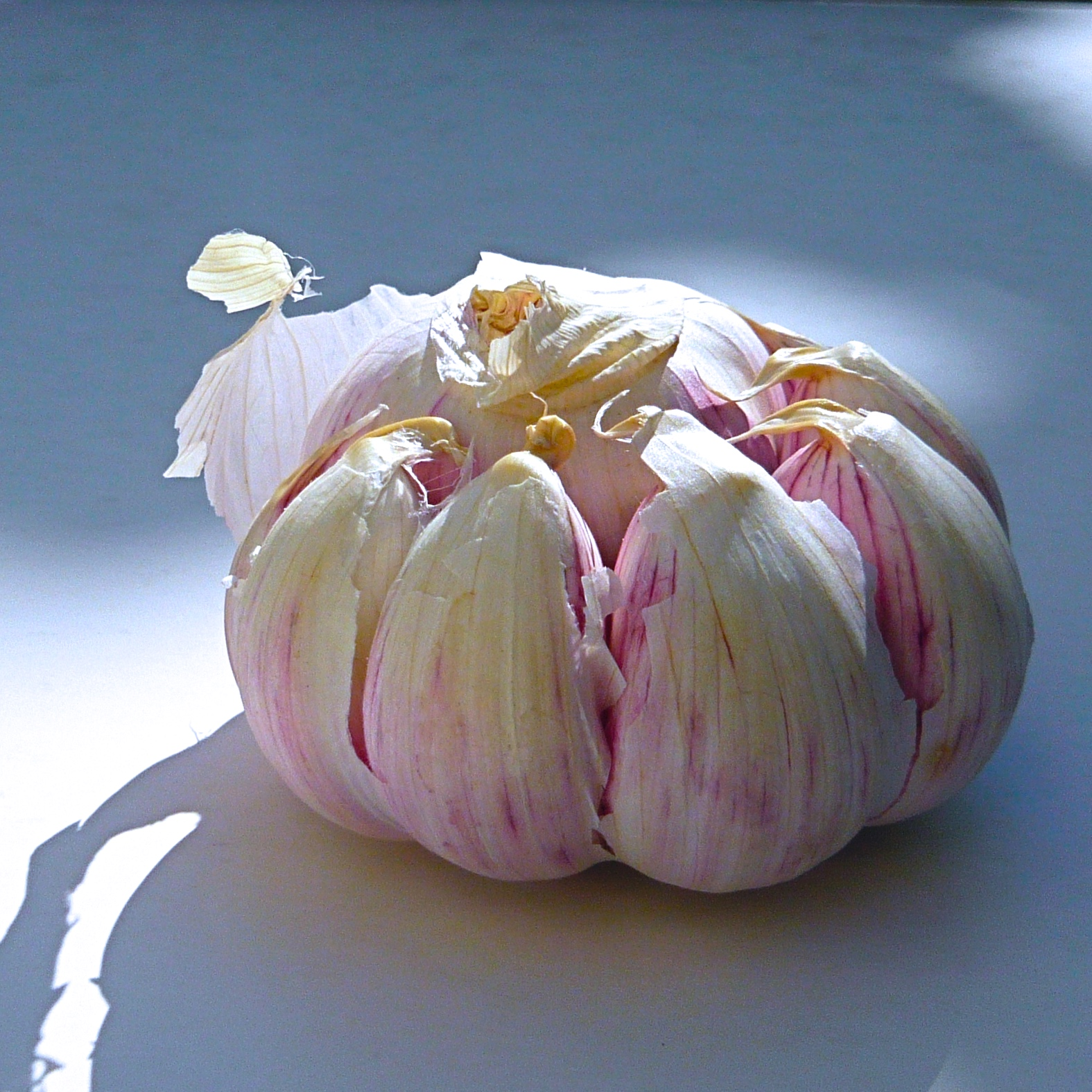 Momma garlic and her little babies. Photographe : Anne-Marie Bouyssou.